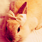 Супер-кролик