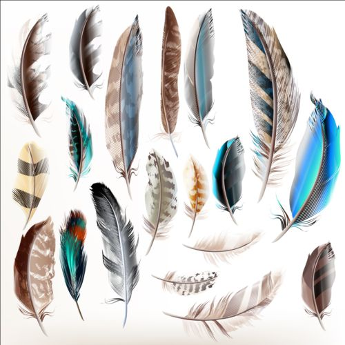Various-dird-feathers-set-vector-03.jpg
