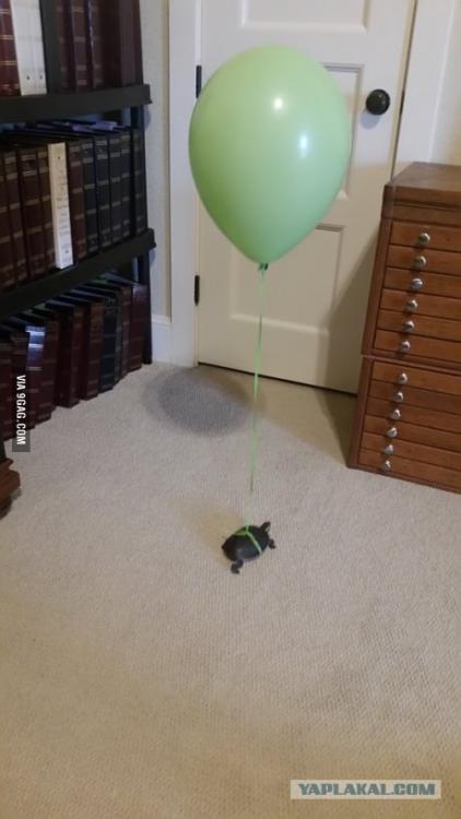 turtle cleaning.jpg